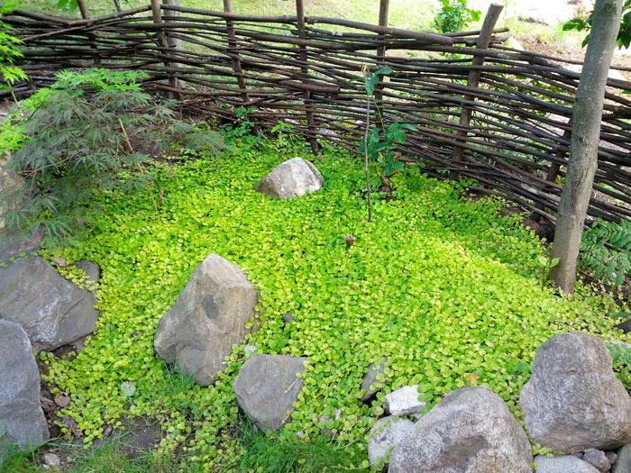 Missa inte: Den fantastiska japanska trädgÃ¥rden vid Byälvsvägen ... : japansk trädgård : Trädgård