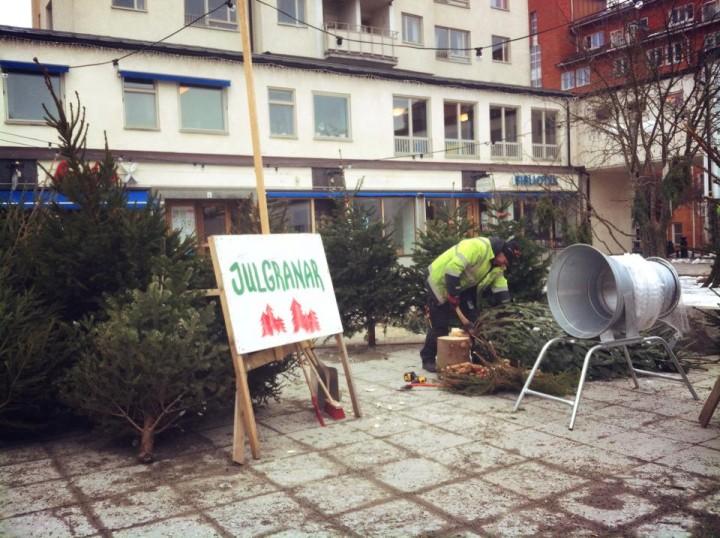 Julgransförsäljningens märkliga återkomst på Lagaplan (foto: Annika Fundin)