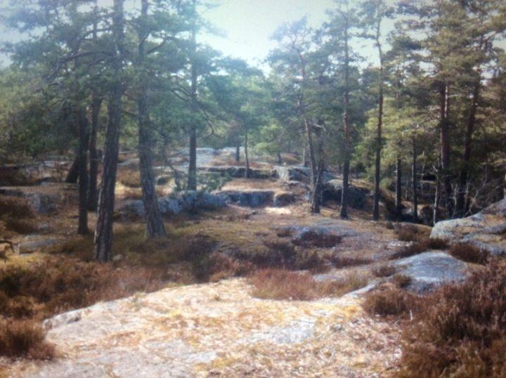 En skog En spännande skog Upphovsman: Maria och Eveline